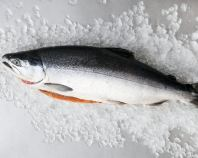 Frozen Whole Salmon (4/5) 4kg-4.5kg ��Sold per nos��
