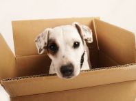 Pets Relocations