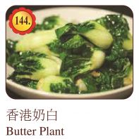 Butter Plant