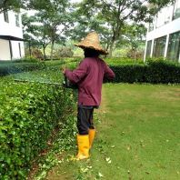 Plate Pruning Service