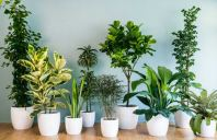 Indoor Plants Rental Service