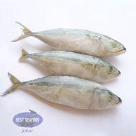 甘邦鱼 / Ikan Kembong (Size 6-8)(sold per kg)