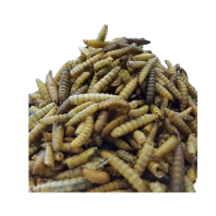 Microwave Dried Larvae