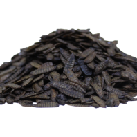 Oven Dried Larvae