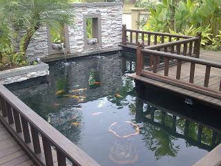 Green pond water remedies kohaku koi house sdn bhd for Koi pond design malaysia