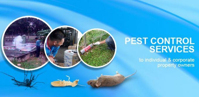 南方消灭害虫公司